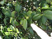 現場(植物).jpgのサムネール画像のサムネール画像