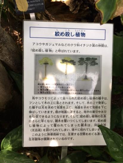 syokubutu1