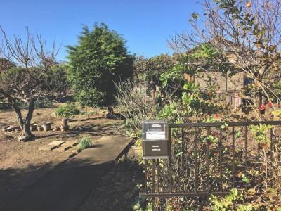 綺麗なお庭